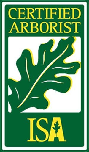 Certified Arborist Dallas