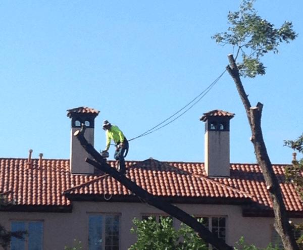 Tree Service Southlake, Frisco