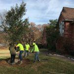 Tree Planting Southlake