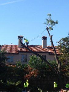 Tree Removal Dallas