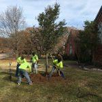 Tree Planting Frisco