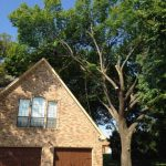 Tree Removal Frisco