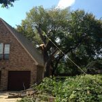Tree Removal Colleyville