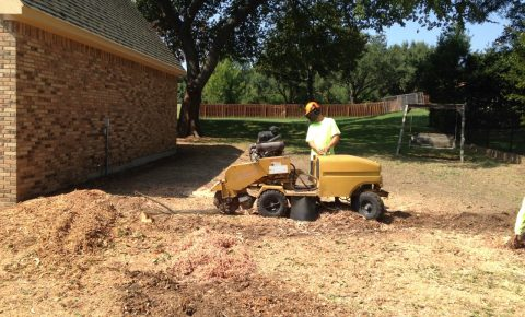 Why Stump Grinding Is Important