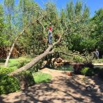 Tree Removal Southlake