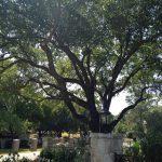 Tree Trimming Southlake