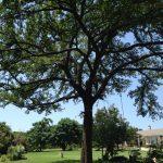 Tree Trimming Frisco
