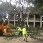 Tree Trimming Dallas