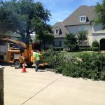 Tree Trimming Southlake
