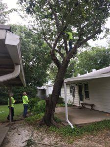 Storm Damage Tree Trimming
