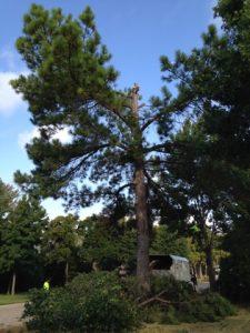 Winter Tree Service Frisco
