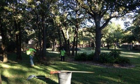 Fall Tree Trimming
