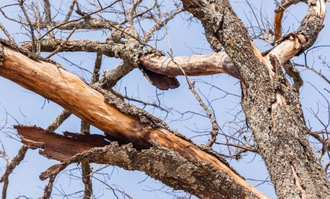 how to save a dying tree